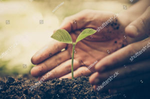 person cupping hands near young plant in the ground