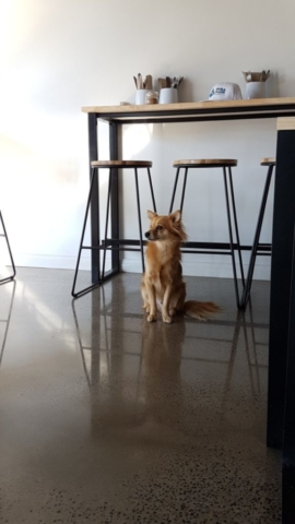 dog sitting on concrete floor