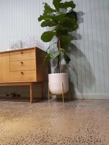 Pot plant and drawers on concrete floor